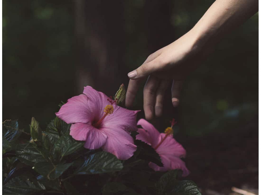 mano che tocca un fiore